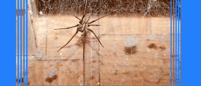 Spider Control Birchgrove